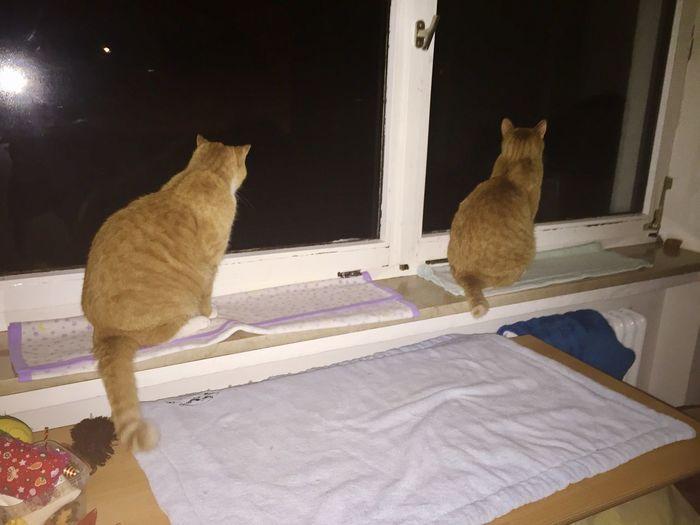 Katzen 💜 Cats