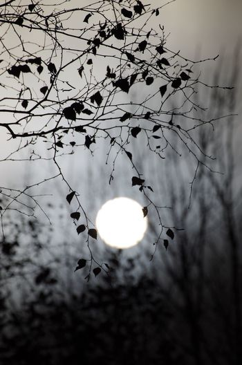 Erkrath EyeEm Gallery I LOVE PHOTOGRAPHY Beauty In Nature Branch Close-up Day Daylight Flower Illuminated Low Angle View Moon Nature No People Outdoors Shiluette Sky Sun Tree