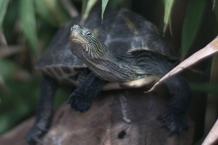 Turtle resting on log