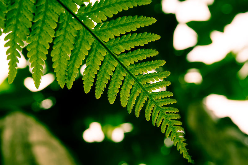 Green Color Plant Part Leaf Plant Growth Close-up Nature No People Selective Focus Sunlight Day Focus On Foreground Fern Beauty In Nature Outdoors Tree Natural Pattern Pattern Shadow Tranquility Leaves