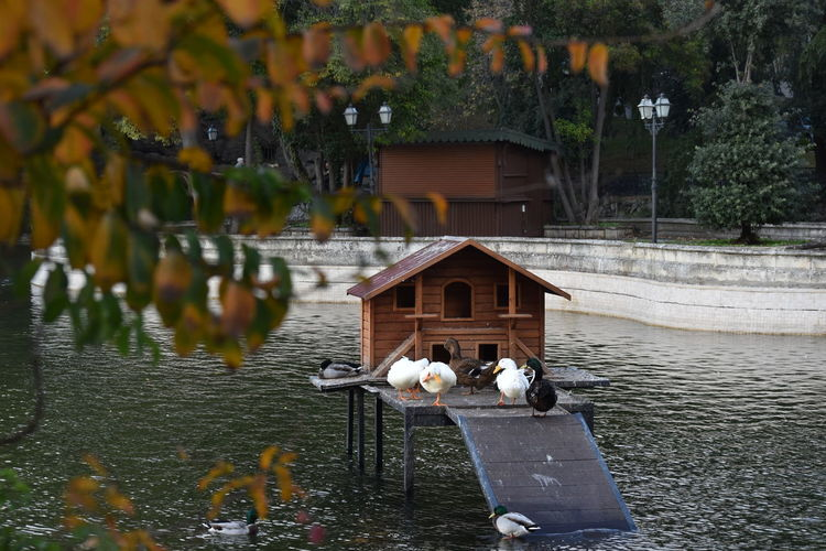 ducks Water Tree Vertebrate Animal Animal Themes Bird Lake Plant Nature Group Of Animals Animals In The Wild Animal Wildlife No People Built Structure Architecture Day Growth Outdoors Wood - Material Ducks