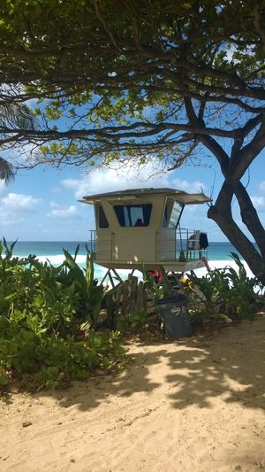 Surf life saving hut at the North Shore, O'ahu, Hawaii. Tree Plant Built Structure Architecture Nature Growth Building Exterior Sky No People Day Land Sunlight Outdoors Beach Building Water Branch Transportation Sand Shadow Surf Life Saving O'ahu Hawaii North Shore Oahu