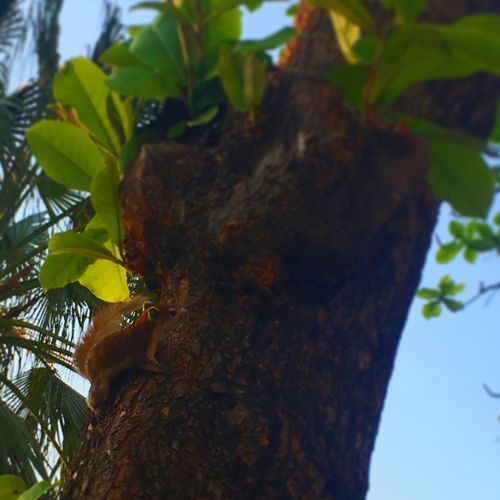 Leaf Tree Nature Growth Tree Trunk Close-up Branch Day No People Outdoors Low Angle View Beauty In Nature