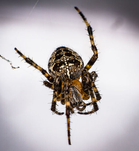 Animal Leg Animal Themes Animal Wildlife Animals In The Wild Close-up Day Insect No People One Animal Outdoors Spider
