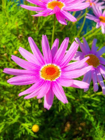 Flower power Flowering Plant Flower Plant Freshness Vulnerability  Fragility Growth Petal Beauty In Nature Flower Head Close-up Pollen Pink Color Focus On Foreground Green Color Outdoors Nature No People Day