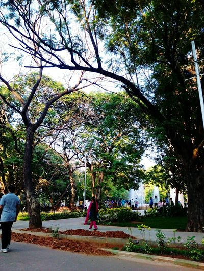 The Park at Anna Nagar! Exceptional Photographs Showcase March Quality Photography Ayub The Poet Ayubkhan.U Q Quintessential Yeah Springtime! En Vogue Poem Poetry Check This Out Remembering The Times Poetry.com/ayubkhanu Green Green Green!