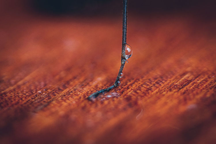 Close-up of keg of insect against water drop on table