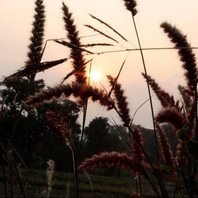 Canoneos450D Irfan Ranchi Sun Wild Irfan2266 5foru Photography
