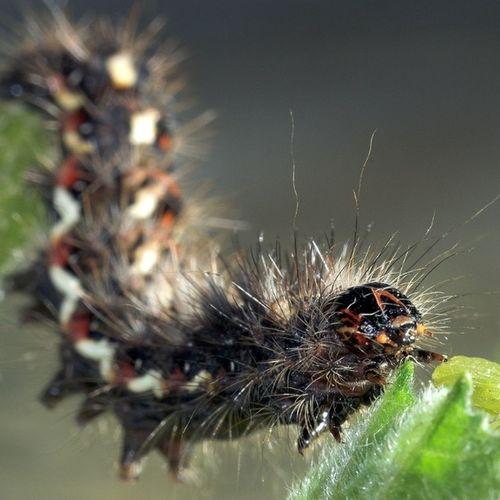 Bruco Cavolo Giardino Garden erba Caterpillar cabbage grass
