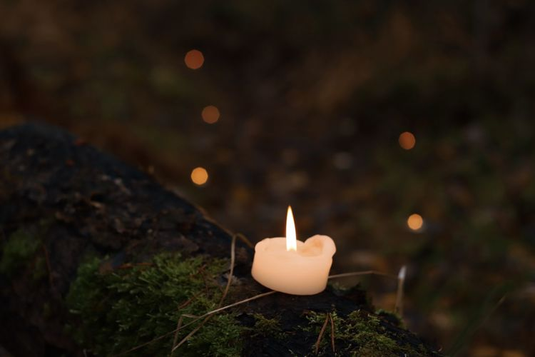 High angle view of lit candle against plants