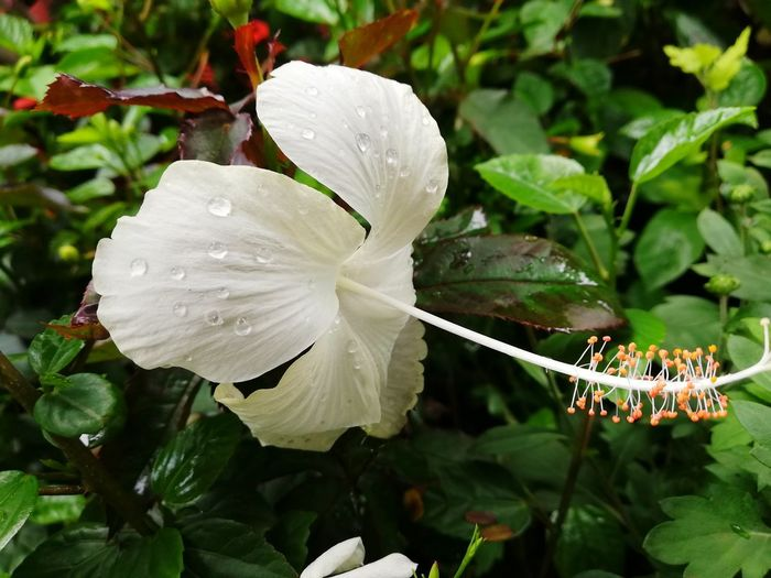 Flowers Flower Head Flower Water Leaf Insect Close-up Plant Petunia