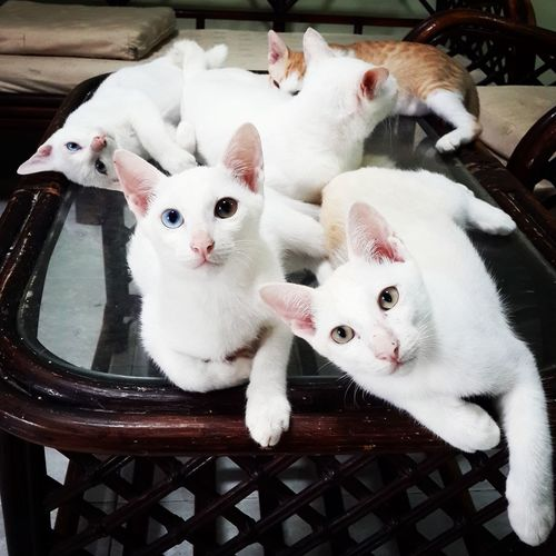 Cats relaxing on table