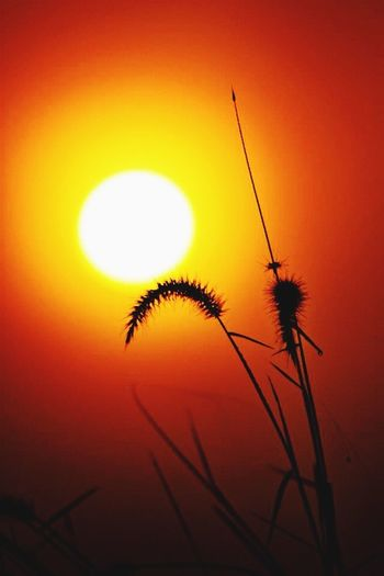 Sunrise Nature Sun Silhouette Plant Growth Beauty In Nature Sky Close-up Outdoors first eyeem photo
