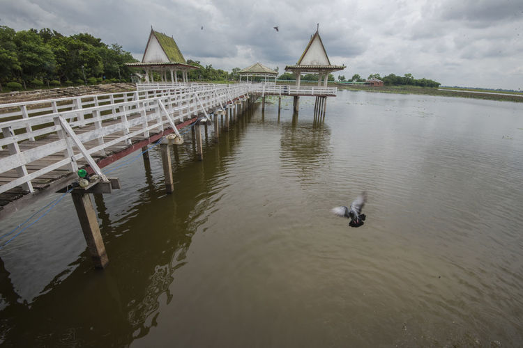 Bueng Si Fai, Phichit, Thailand Bueng Si Fai Thailand Animal Themes Animals In The Wild Architecture Beauty In Nature Bird Building Exterior Built Structure Cloud - Sky Crocodile Day Nature No People Outdoors Park Phichit Pigeon Sky Water Waterfront