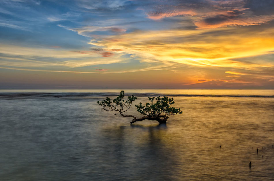 Deer Tree Seascape Seascape Photography Beach Beauty In Nature Cloud - Sky Horizon Horizon Over Water Idyllic Indonesia Photography  Nature No People Orange Color Outdoors Plant Scenics - Nature Sea Sky Sunset Tranquil Scene Tranquility Tree Water Waterfront