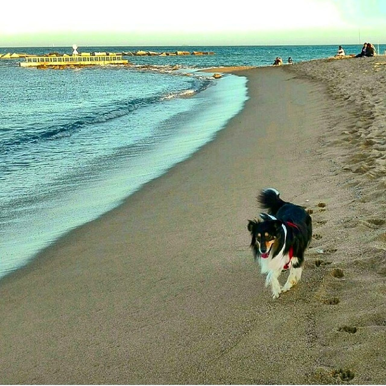 beach, sea, sand, shore, nature, water, beauty in nature, real people, scenics, tranquil scene, horizon over water, dog, day, pets, leisure activity, outdoors, tranquility, lifestyles, one person, animal themes, wave, domestic animals, mammal, sky, clear sky, people