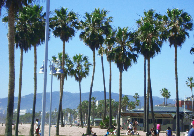 Panoramic shot of palm trees on beach against sky
