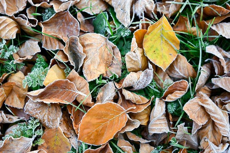 Perfect carpet! Leaf Nature Outdoors Frosty Mornings No People Close-up