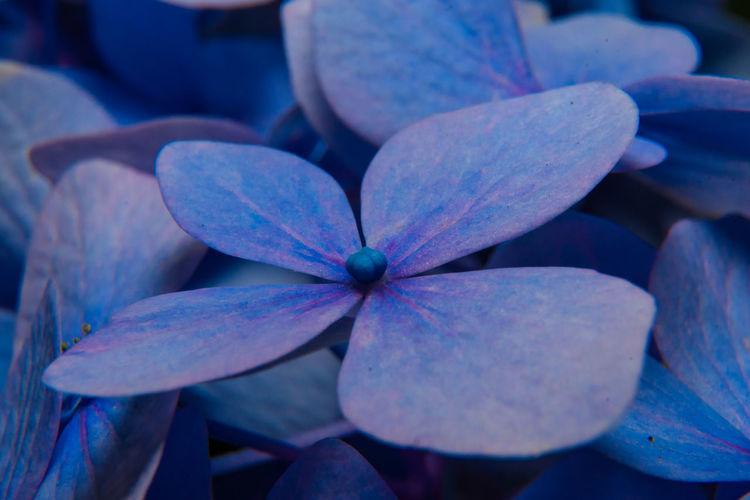 Close Up blue