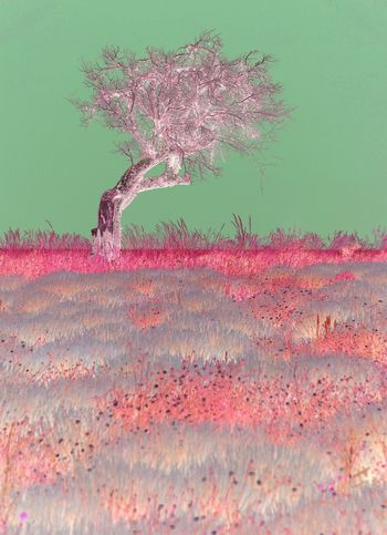 Magenta dreaming (experimental) Colors Couleurs De La Provence Dreaming Experimental France Landscape Magenta Pink Color Provence Tree