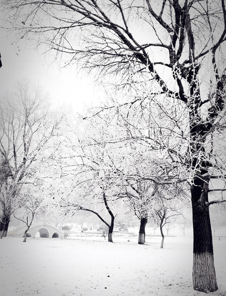 Trees Rime Winter Snow ❄ City Hometown Beautiful Day Seeing The Sights From My Point Of View Taking Photos Mobilephotography IPhoneography My Winter Favorites Cityscape Snow My Best Photo 2015 Just Around The Corner River Riverside Bridge Architecture Black And White China