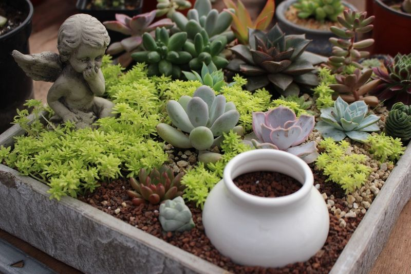 High Angle View Of Angel Statue In Wooden Container With Succulent Plants