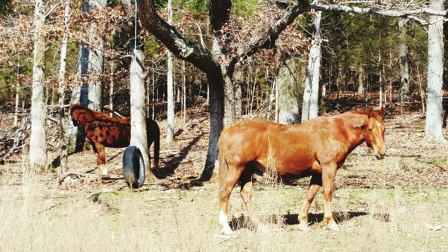 EyeEmNewHere Animal Themes Mammal Domestic Animals Horse Livestock Tree Sunlight No People Nature Young Animal Day Full Length Togetherness Foal Outdoors
