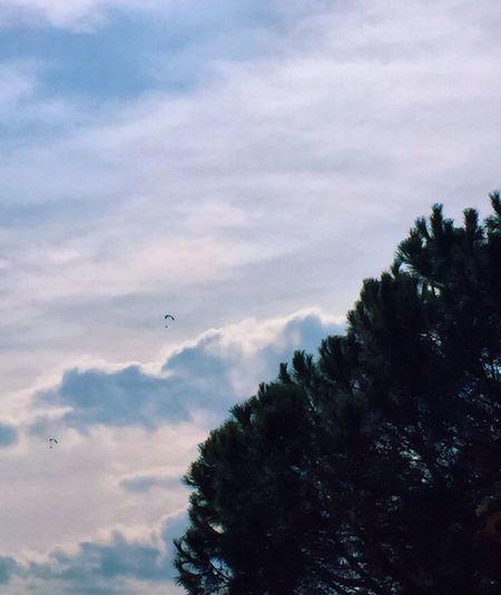 Flying Cloud - Sky Sky Tree Nature Airplane Air Vehicle Paramoteur CIELFIE Skyfie Ciel Et Nuages Arbre