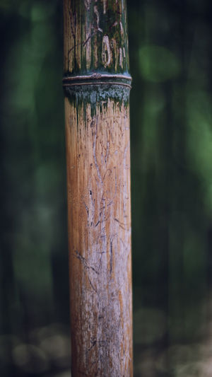 Close Up Of Wood