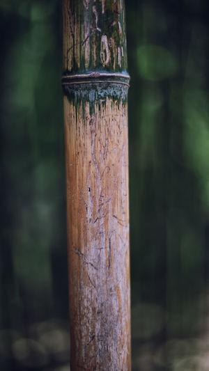 Close up of wood