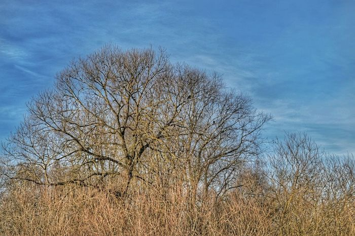Tree Sky Nature Growth No People Day Outdoors Beauty In Nature Nature_collection Branch Blue Patterns Of Nature Tranquility Pattern Landscape Landscape_photography Sunshine Nature On Your Doorstep