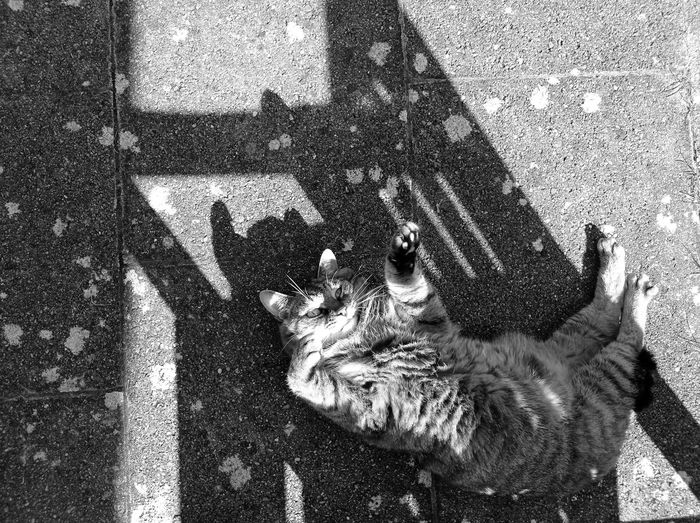 High angle view of cat shadow