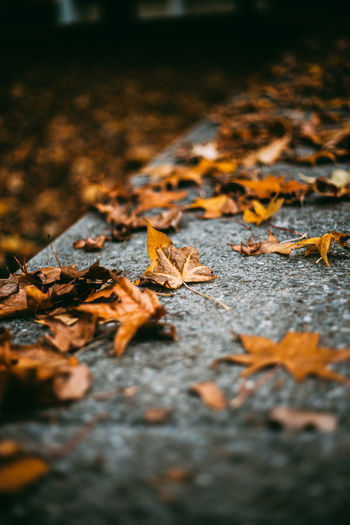 Autumn Leaves On Footpath
