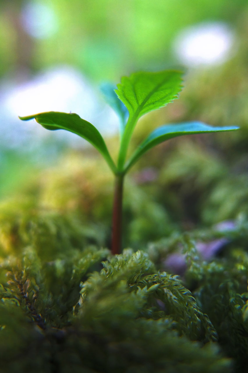 growth, green color, plant, nature, selective focus, no people, beauty in nature, freshness, leaf, close-up, outdoors, day, fragility