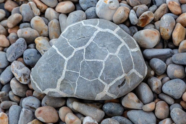 A patterned stone on a pebble beach, at Alum Bay on the Isle of Wight Stone - Object High Angle View No People Day Close-up Rock - Object Nature Pebble Solid Rock Natural Pattern Stone Pebbles Isle Of Wight  Beach Alum Bay