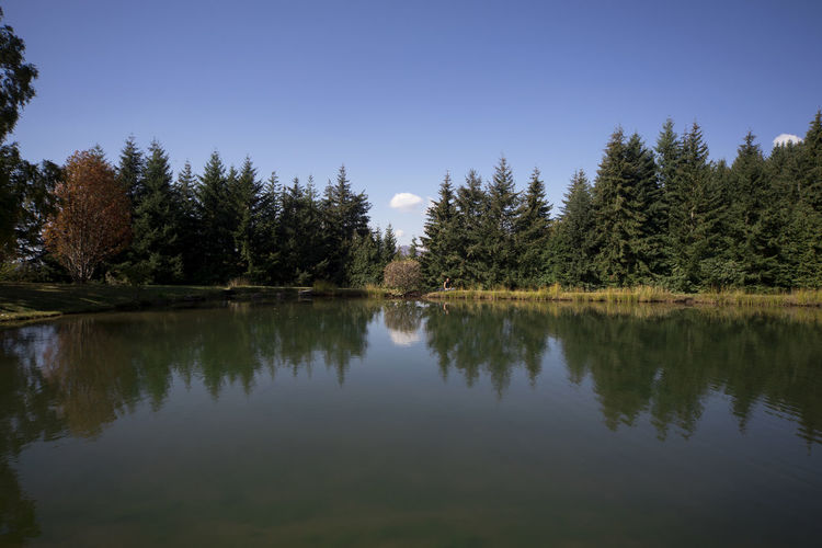 Tranquility Reflection Water Tranquil Scene Beauty In Nature Nature Scenics - Nature Clear Sky Day Idyllic Outdoors Non-urban Scene Tree Plant Sky Reflection Lake Symmetry Lake