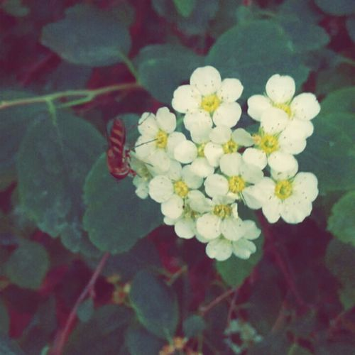 Beeutiful🌼🐝 Nature Flower Bee Springtime Outdoors Close-up