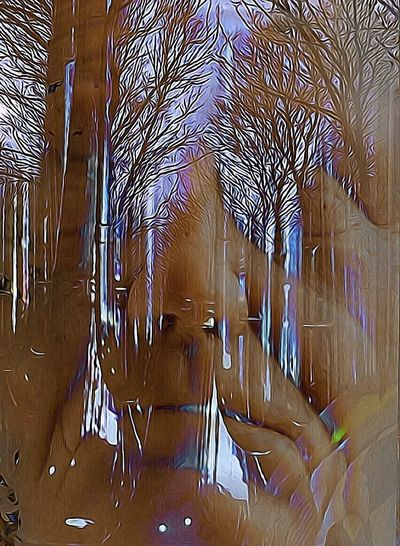 The Trombone Woods Facial Experiments Photographic Approximation Forgotten Dreams New Nightmares