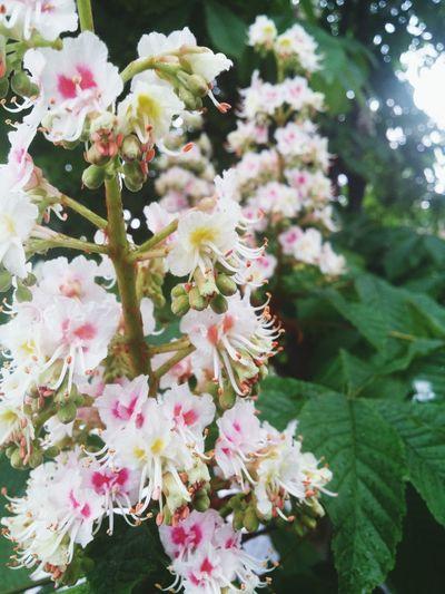 Flowers Nature Spring Flowers Rain