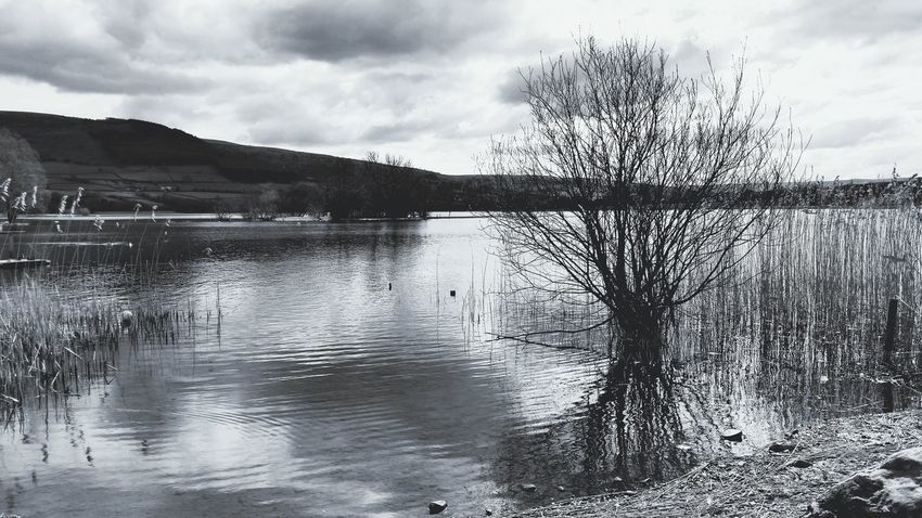 Looking To The Other Side Black And White Black & White Lake Llangorse Llangorse Lake Powys Tree Reflection Wales