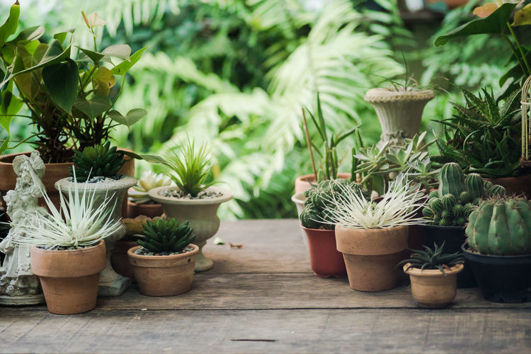 Potted Plant Growth Plant Succulent Plant Nature No People Cactus Day Beauty In Nature Green Color Close-up Front Or Back Yard Outdoors Flower Pot Focus On Foreground Decoration Side By Side Botany Table Plant Part Houseplant Gardening