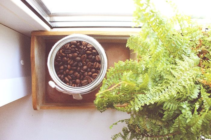 Coffee time . Greenhouse Indoors  No People Tree Nature Day Enjoying Life Coffee Coffeelovers Coffee Time Ownstyle Photographylovers Youngforever GoodJob Photography Photos Good Day Canon Nice Time Beauty In Nature Photooftheday Hello World Indoors  Modern