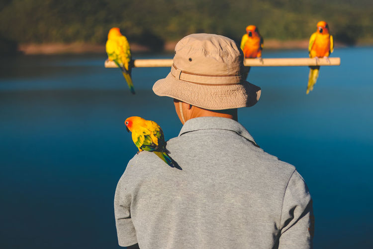 Rear view of man with birds against lake