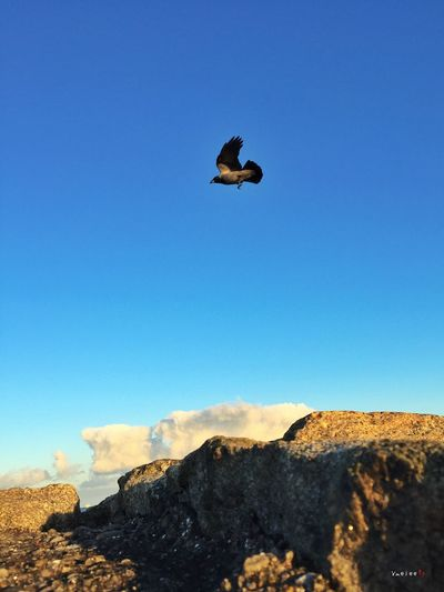 Taking Photos IPhone IPhoneography Iphonephotography Bird Flying Nature Animal Wildlife Sky Dublin