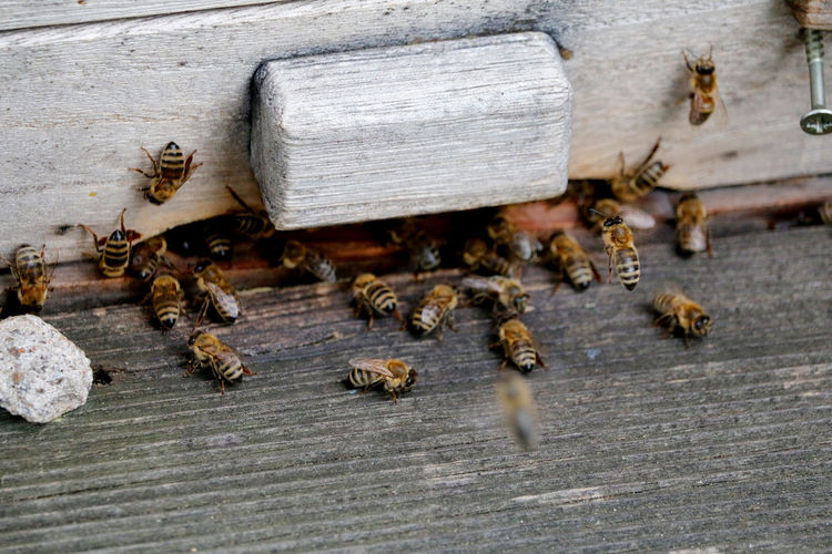 Close-Up Of Bees On Wooden Crate