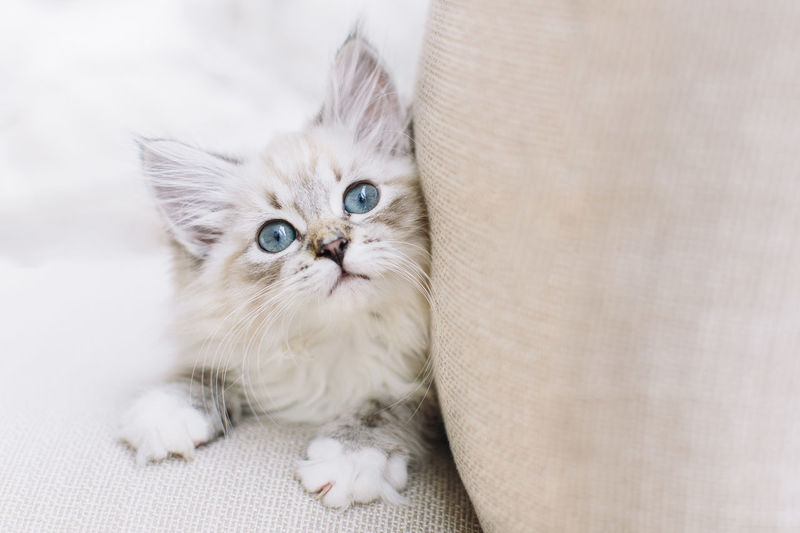 Little cute