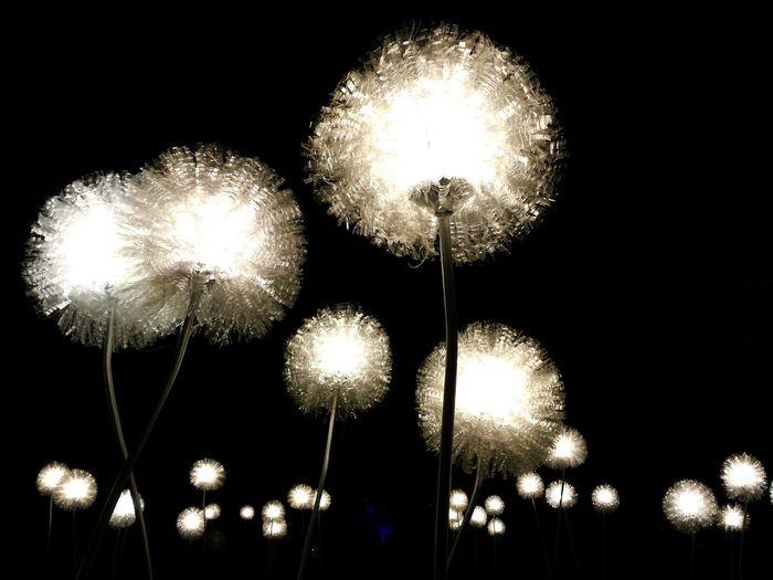 Dandelions Glow 2015 Glow Eindhoven Getting Inspired Light Art EyeEm Best Shots Open Edit From My Point Of View Dandelion