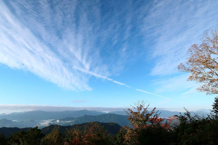 Scenery Tree Mountain Illuminated Blue Sky Cloud - Sky Growing Mountain Range Snowcapped Mountain