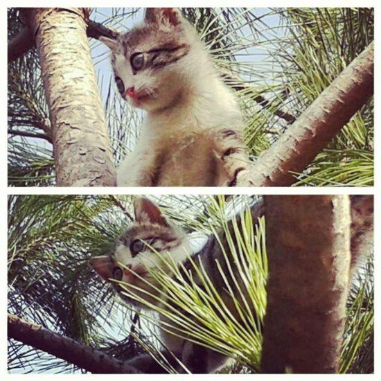 Benim kizim buyumus agaca da cikarmis Mydoughter Mybaby Babycat Beautycat