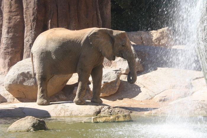 Animal Animal Themes Bioparco Elephant Herbivorous Mammal No People One Animal Outdoors Valencia, Spain Zoology